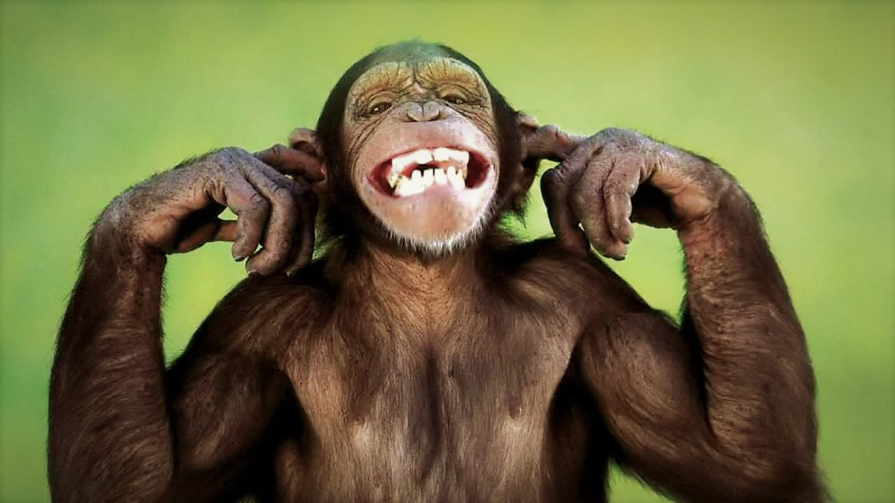 How to take control over your monkey mind!