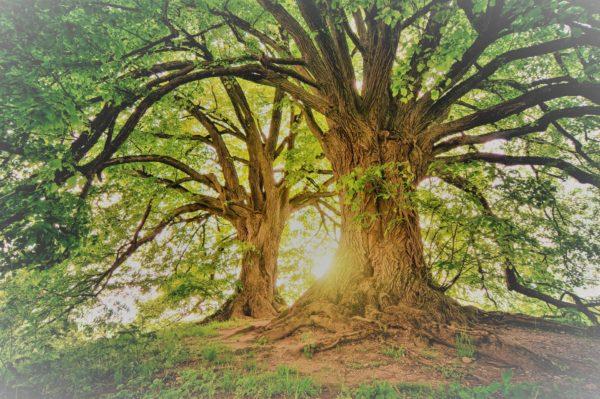 nurture a tree